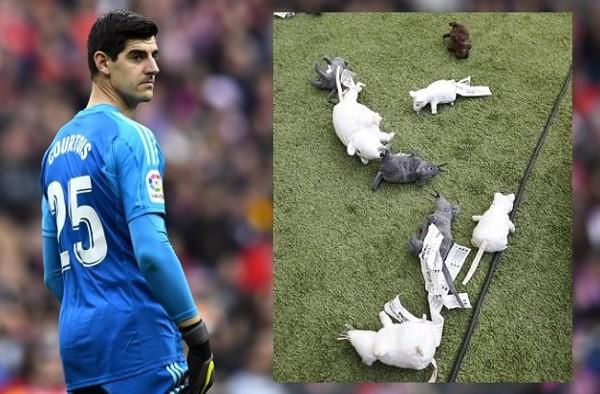 高圖爾斯被扔玩具老鼠